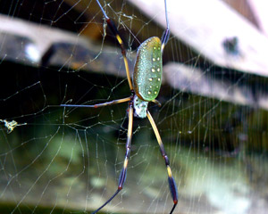 Spider in a Colombian jungle.