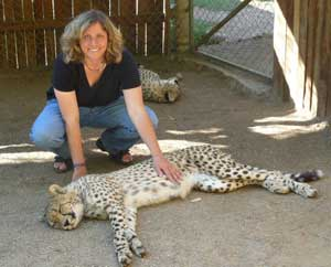 A cheetah encounter at the Cango Wildlife Ranch