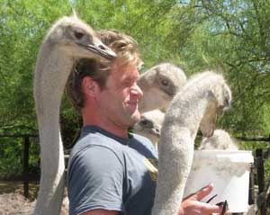 Ostriches give a man a 'neck massage' while snacking.