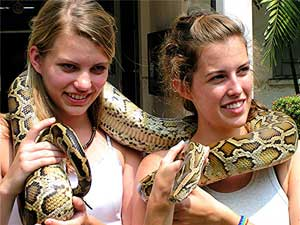 Two sisters pose with a boa constrictor at the snake farm operated by the Thai Red Cross - photos by David Rich