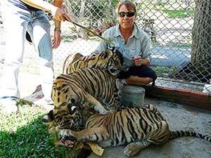 Tiger pile