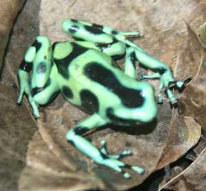Although it's a small country, Costa Rica close to 4% of the world's plant and animal species. Photo courtesy of Exploranatura
