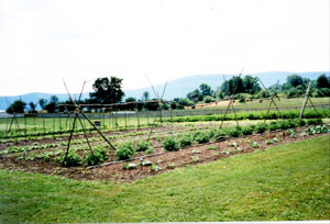 The demonstration gardens as seen from near the round barn, looking toward the visitors center at Hancock Shaker Village.
