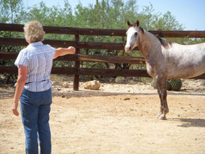 The author and Scattergun at the Tanque Verde Ranch in Arizona