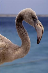Seabird in Bonaire.