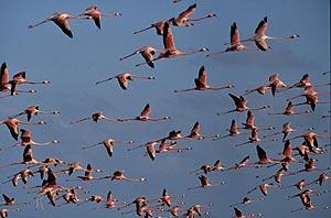 Flamingoes in Bonaire. Photo by Bonaire Tourism Corporation - Suzi Swygert
