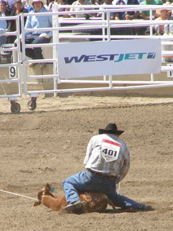 Roping event at the Stampede.
