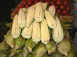 Corn at the public market in Iquique. It's eaten here on the cob and in ceviche, the raw fish appetizer. photo by Max Hartshorne.
