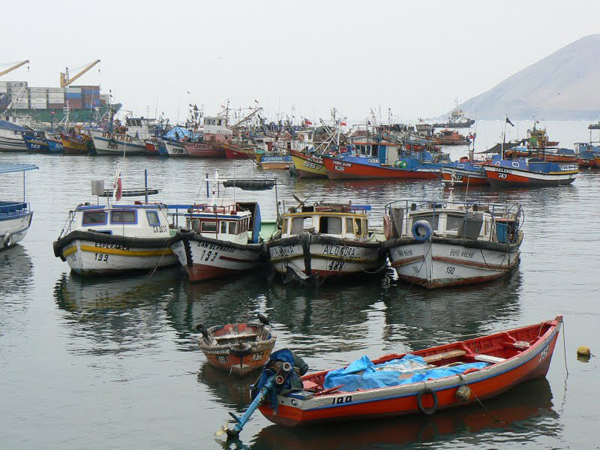 Fishing boats in Iquique harbor. photo by Max Hartshorne.