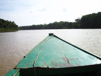 Wildlife spotting on the Kinabatangan River