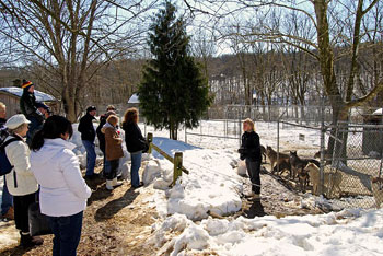 The Speedwell Forge Wolf Sanctuary Tour