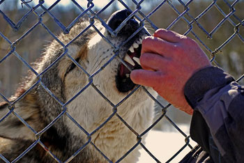 The Speedwell Forge Wolf Sanctuary