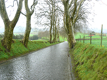 A cobblestone road on a country lane is striking...there are many of these in the Azores, built by hand.