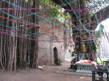 At the gates to Shaniwar Wada fortress of the Marathis in the city center, we can take rest at the giant banyan melded with the walls.