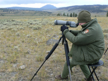 At the scope, viewing a pack of wolves in Yellowstone in August 2010.