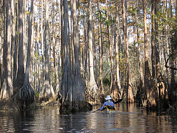 Kayaking Brown Trail in Okefenokee Wildlife Refuge. Photo by Blaine Eckberg