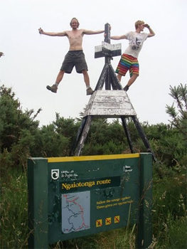 Atop a trail sign on the Te Araroa.