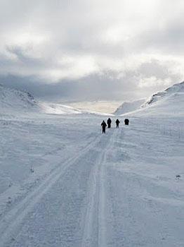 Skiers on prepared loipe