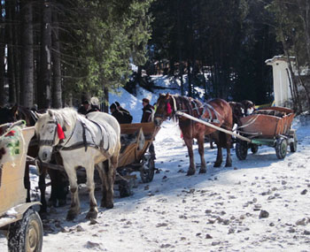 Horse-drawn wagons are used to transport skiers.