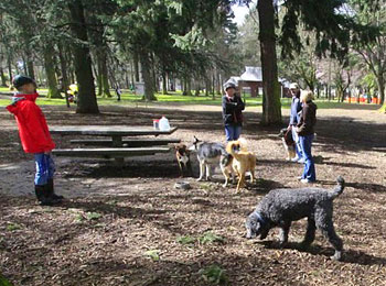Ozzie socializes with fellow dogs at Wilshire Park in Northeast Portland.