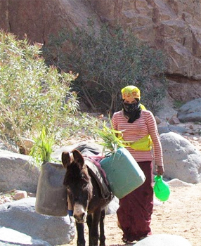 Bedouin woman with donkey on the trail.
