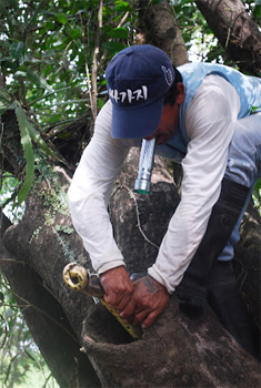 Finding an anaconda in a tree trunk.