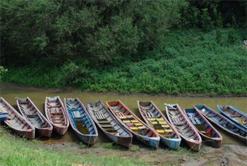 Canoes line up for the 3 hour motor up to the jungle lodge.