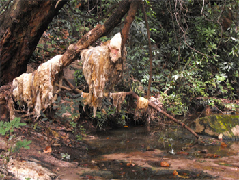 Wet goat pelts hung over the tree branches.