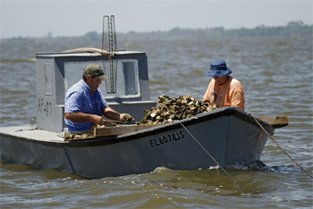 Oystermen at work near Apalachicola. photos courtesy of the Chamber of Commerce except as noted.