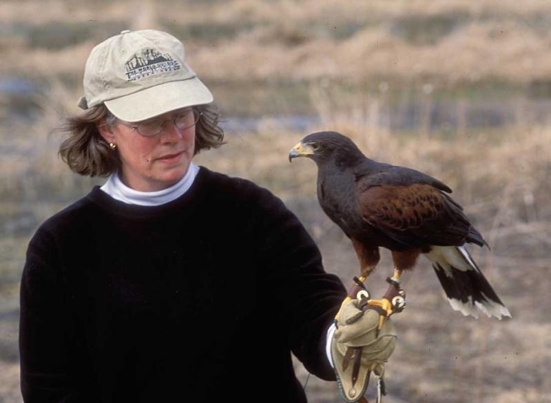 Falkland Islands: Birding and Avoiding the Skuas