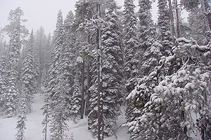 Montana is famous for its frozen trees on the sides of the chairlifts.