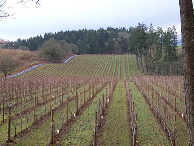 Rows of vines in Oregon's Willamette Valley. photos by Eric Blankenburg.