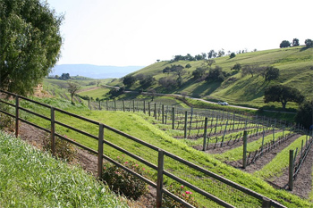 Ballard Canyon, near Solvang, is a bucollic wine country drive. photos by Michael Cervin.