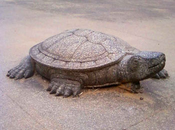 A stone tortoise at the Madikeri Fort. It is said that the panel below the tortoise can be moved and opens up to a secret tunnel that the kings had gotten dug up to escape in case of enemy attack.