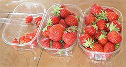 Three varieties of French strawberries.