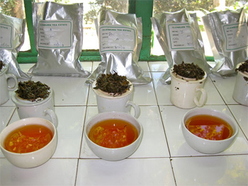 Tea tasting at Glenburn Estates teas in Darjeeling.
