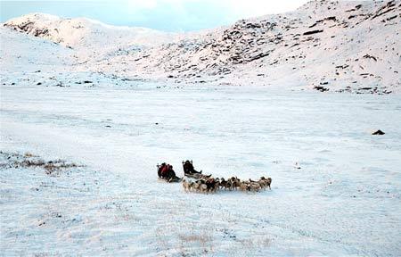 Sledge dogs running near Ilulissat.
