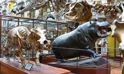 Natural history museum,Dublin.