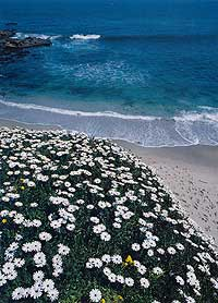 A beach near San Diego, California. Photo by Neil Sutherland.