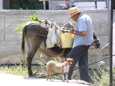 A man, his donkey and his dog in northern crete