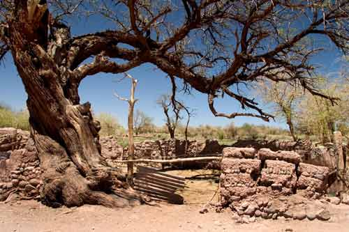 Tree in San Pedro de Atacama.