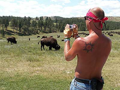 Motorcyclist taking a photo of buffalo during Sturgis Rally Week in Sturgis, South Dakota