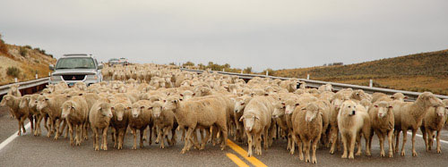 Sanpete Valley Sheep Ranchers
