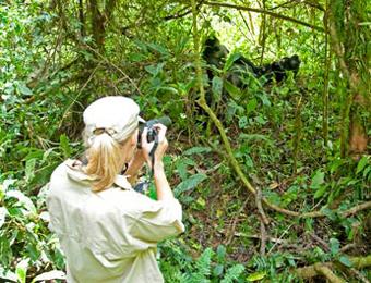 Photographing a gorilla in Rwanda. photo: Silverback Lodge.