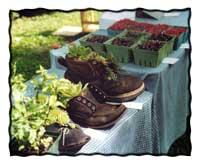 Farm Stays in New England
