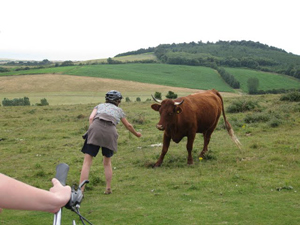 Bull and bike rider on the Isle of Wight.