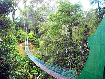 Bridge through the jungle in Borneo