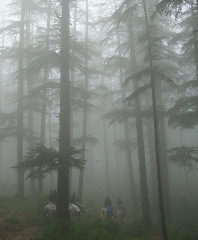 Riders in the mist in Naldehra, a village in Himachal Pradesh, India