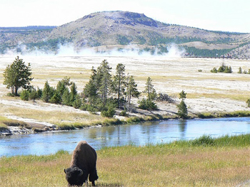 Yellowstone National Park is the trump card at Chico, nearly every guest wants to visit the giant park and see the amazing animals there. photo by Max Hartshorne.