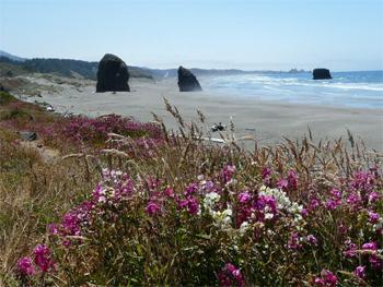 Oregon's beautiful dunes.